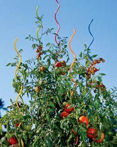 Cool tomato trellis