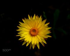 3D Star by Susan Chan on 500px
