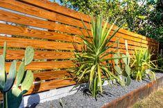 Des plantes de bordure sur la clôture en bois