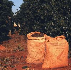 Coffee plantations in Brazil. Coffee plantations at Columbia. Coffee plantations around the world.
