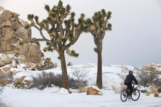 Winter storm brings snow to California's New Year's celebration First Day Of Winter, Winter Time, Winter Season, Joshua Tree National Park, National Parks, Storm Photography, Winter Storm, Urban Life, Photos Of The Week