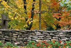 Stone wall with fall foliage and hardwood trees