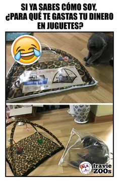 Soy de gustos simples no te esfuerces Chisme Meme, Animals And Pets, Funny Animals, Pinterest Memes, Good Humor, Borderlands, Animal Memes, Bff, Funny Jokes