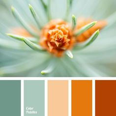 Color Palette (Color Palette Ideas) Orange and coral with sage and mint green