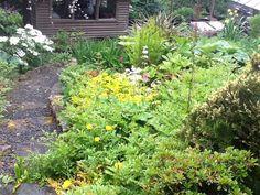 Noel's garden