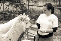 Zookeeper Cynthia with Alpacas. Rancho Las Lomas Wildlife Foundation