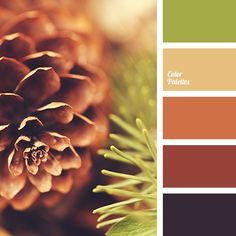 almost black color, barley grain color, color of pumpkin, color of tree, green color, light green, pumpkin color, red-brown, reddish brown, shades of reddish-brown, tree color, warm green, warm shades of brown.