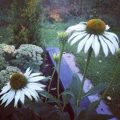 Höst i trädgården.