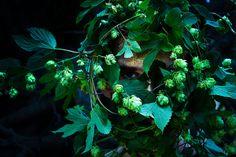 Dabba Floral Waters / Dabba kukkaisvedet | 365 days with Ida