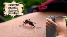 This article reveals the numerous home remedies for mosquito bites and healing action and the safe methods to utilize them. Home Remedies For Mosquito, Natural Home Remedies, Alternative Health Care, Homeopathic Remedies, Health Advice, Health Diet, Rid, How To Get, Couture