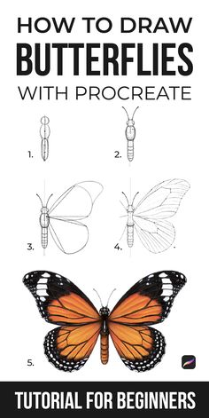 Butterfly Mosaic, Butterfly Drawing, How To Draw Butterfly, Beginner Drawing Lessons, Drawing For Beginners, Digital Art Beginner, Pencil Drawings Of Flowers, How To Draw Steps, Insect Art