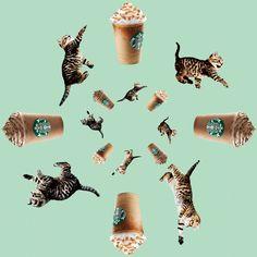 Starbucks Is A Teenage Dream, Survey Says