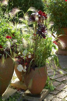 graminées ornementales - orge à crinière en pots en terre cuite pour décorer la terrasse méditerranéenne
