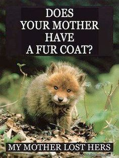 """Here Are Some """"Stop Animal Cruelty"""" Quotes That Will Go Straight Into Your Heart - World's largest collection of cat memes and other animals Chinchilla, Animal Cruelty Quotes, Stop Animal Cruelty, Animal Quotes, Pitbull, Cane Corso, Sphynx, Wild Life, Rottweiler"""