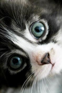 Beautiful Kitten. Love her eyes!  Go to www.YourTravelVideos.com or just click on photo for home videos and much more on sites like this.