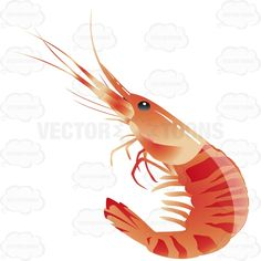 Whole Red Prawn Intact #bite #chow #cookery #cuisine #diet #eat #eatable #fare #feed #food #goodies #groceries #grub #keep #meal #menu #mess #outing #prawn #redprawn #seafood #shrimp #snack #store #table #whole