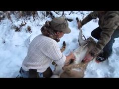 ▶ Mountain Woman Journals - How to Field Dress a Deer - YouTube