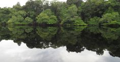 Pesquisa revela árvores mais comuns na floresta amazônica - Fotos - Meio Ambiente