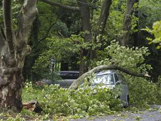 When a tree hits your home or car, who is responsible? - nj.com Tree Felling, Tree Care, Cat Hair, Looking For Someone, Trees And Shrubs, Autumn Trees, Car Insurance, No Response, Tropical