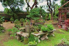 Сад Бонсай в Маниле (Манила, Филиппины)
