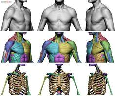 Anatomy 360 : Photo