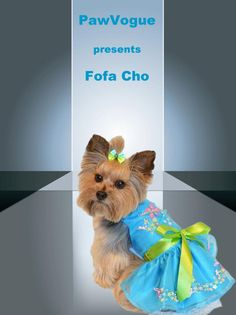 Fofo Cho from NJ