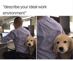#worklife #bye #funny #workmemes #lol #no #workday #career #newjob #coworkers #mood #attitude #mindset #customerservice #worklife #jobs #jobmemes #funnymemes Funny Animal Memes, Cute Funny Animals, Cute Baby Animals, Funny Cute, Funny Dogs, Funny Memes, Cat Memes, Funniest Memes, Top Funny