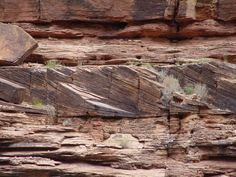 sedimentary structures | Crossbedding in the Toroweap (Leighty)