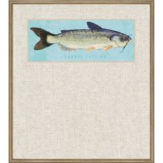 Channel Catfish Framed Graphic Art
