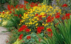 The hot border at West Dean garden, Chichester with Crocosmia 'Lucifer'.