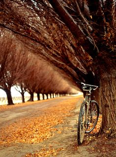 Argentina, Mendoza, Bicycle on Side of Dirt Road lined with Trees, Kieran Scott