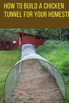 How to Build a Chicken Tunnel For Your Homestead. | Ideahacks.com