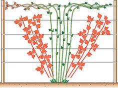Die 8 Besten Bilder Von Pflanzen Schneiden Gardens Garden Plants