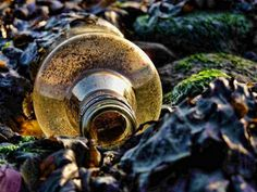Gypsy Magic: Easy Seaweed Bottle Spell For Luck