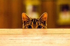 Mike Ste. Marie Photograph - I See You by Mike Ste Marie