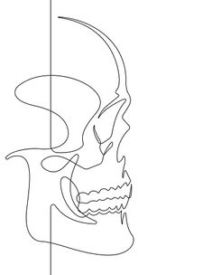This is a single continuous vector line drawn out to represent the face of a human skull. Line Drawing Tattoos, Line Tattoos, Sleeve Tattoos, Outline Drawings, Art Drawings, Continuous Line Tattoo, Art Alevel, Single Line Drawing, Abstract Line Art