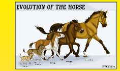 the theory of evolution the horse Evolution of horses note: this online review is updated and revised continuously, as soon as results of new scientific research become available.