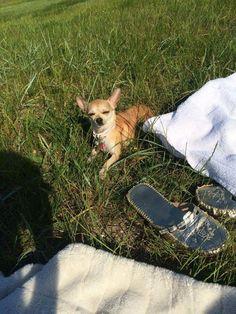 Mika er blevet skræmt væk af en stor hund