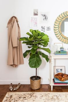 A fiddle leaf fig plant adds life to a functional entry hallway | Lonny.com