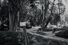 Jardim Botânico - Lisbon, Portugal