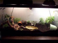 giant african land snail tank setup - Google Search
