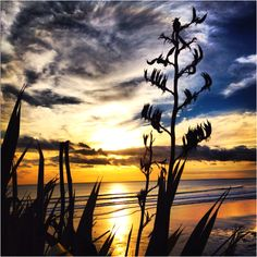Muriwai Beach Sunset..