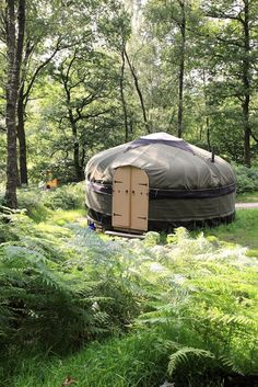 yurt among trees and ferns..it looks as a good idea to use this while building the actual cob dream home..