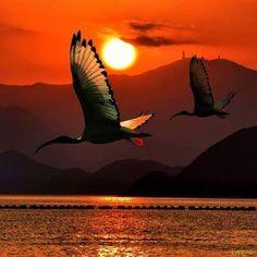 This is a gorgeous sunset photo with beautiful birds. Beautiful Sunset, Beautiful Birds, Beautiful World, Animals Beautiful, Stunningly Beautiful, Cool Pictures, Cool Photos, Beautiful Pictures, Tier Fotos