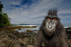 Art Perceptions: Wildlife Photographer of the Year