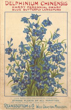 Delphinium seed packet illustration by Reamsbottom & Co., West Drayton, Middlesex, c1934 | by mikeyashworth