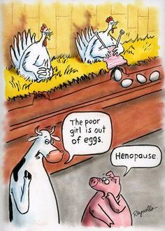 How about a little menopause humor to start your week, hehe. Menopause Humor, Menopause Symptoms, Funny Cartoons, Funny Jokes, Hilarious, Food Jokes, Cartoon Humor, Chicken Jokes, Funny Chicken
