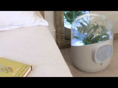 Air Purifier Uses a Plant to Clean the Air in Your Home