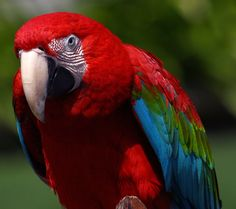 Christmas Parrot Portrait from Seaport Village in San Diego.