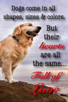 Dogs come in all shapes, sizes & Colours, BUT their Hearts are all the same Full of LOVE ...::oh so true::
